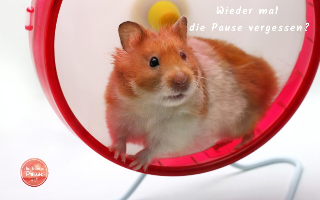 hamsterrad schule